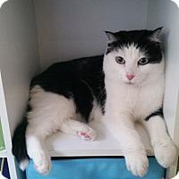 Adopt A Pet :: Missy - Laguna Woods, CA