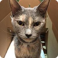 Adopt A Pet :: Taryn - Brooklyn, NY