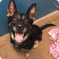 Adopt A Pet :: Zelda - Issaquah, WA