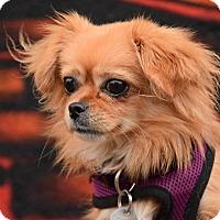 Adopt A Pet :: Carly Rae Jepsen - Jersey City, NJ