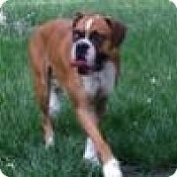 Adopt A Pet :: Lulu - Wilmington, NC
