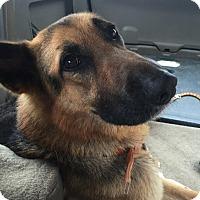 Adopt A Pet :: Sheldon - Pasadena, CA