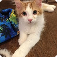 Adopt A Pet :: Max - Potomac, MD