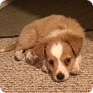 Adopt A Pet :: Lola's Jimminy - Adoption Pending!