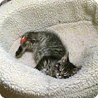 Adopt A Pet :: Hickory - Toronto, ON