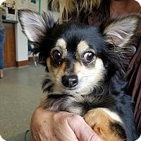 Adopt A Pet :: Mitzi - Indianapolis, IN