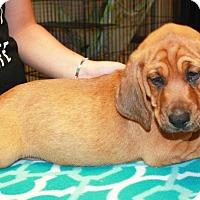 Adopt A Pet :: Lafe - Sparta, NJ