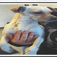 Adopt A Pet :: JUNIOR - Longview, WA