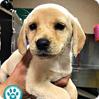 Adopt A Pet :: Maggie May - Kimberton, PA