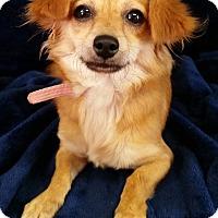 Adopt A Pet :: Carol Montgomery - Urbana, OH