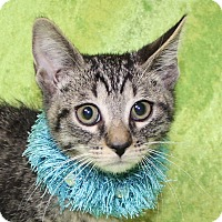 Adopt A Pet :: Carlos - Jackson, MI