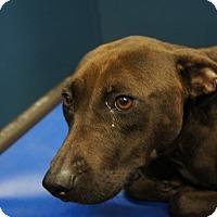 Adopt A Pet :: Cassy - Henderson, NC