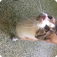 Adopt A Pet :: Beatrix Kiddo - Indianapolis, IN