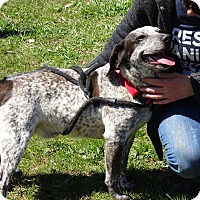 Adopt A Pet :: Petey - Delaware, OH