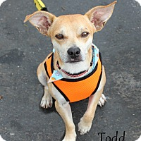 Adopt A Pet :: Todd - Yuba City, CA