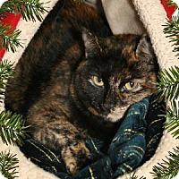 Adopt A Pet :: Tink - Bradenton, FL