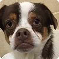 Adopt A Pet :: Ben - Springdale, AR