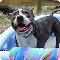 Adopt A Pet :: Nigel Barker - Raleigh, NC