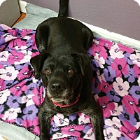 Adopt A Pet :: Cubby - Lisbon, OH