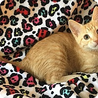 Adopt A Pet :: Strawberry - Tampa, FL