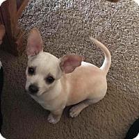 Adopt A Pet :: Cash - Mission Viejo, CA