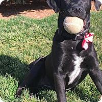 Adopt A Pet :: Starla - New Oxford, PA