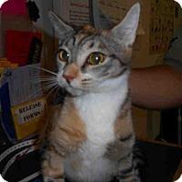Adopt A Pet :: TIGGER - Long Beach, CA