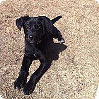 Adopt A Pet :: Ivan - Oak Brook, IL