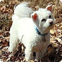 Adopt A Pet :: Yoda - Knoxville, TN