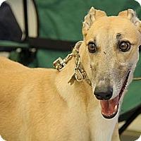 Adopt A Pet :: Ariel - Brandon, FL
