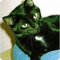 Adopt A Pet :: Jemima - Medway, MA