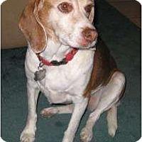 Adopt A Pet :: Rustie - Phoenix, AZ