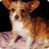 Adopt A Pet :: Sandi - Bridgeton, MO