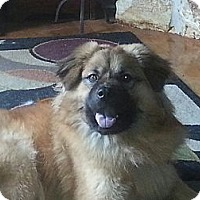 Adopt A Pet :: Simba - Tallahassee, FL