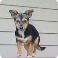 Adopt A Pet :: Mary - ($50 off!) - Staunton, VA