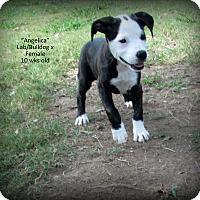 Adopt A Pet :: Angelica - Gadsden, AL