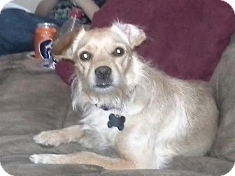 Heather S Foster Dogs Flossmoor Il