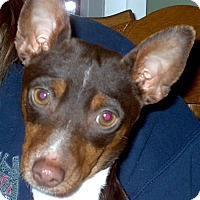 Adopt A Pet :: Sadie 2015 (m/c) - Chesterfield, MI