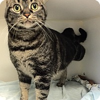 Adopt A Pet :: Boo - Mission Viejo, CA