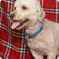 Adopt A Pet :: Lucky - Elmwood Park, NJ