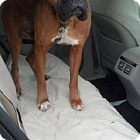 Adopt A Pet :: Wyatt - Brentwood, TN
