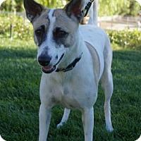 Adopt A Pet :: 'ROBYN' - Agoura Hills, CA