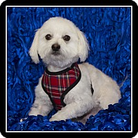 Adopt A Pet :: Kolby - San Diego, CA