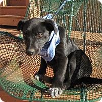 Adopt A Pet :: Sarge - Oakland, AR