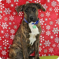 Adopt A Pet :: Henry - Starkville, MS