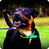 Adopt A Pet :: Duncan~ meet me! - Glastonbury, CT