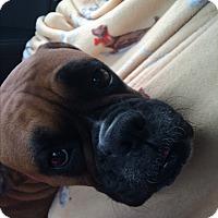 Adopt A Pet :: Anna Jane - Austin, TX