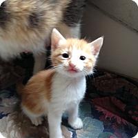 Adopt A Pet :: Possum - Ravenna, TX