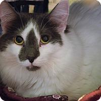 Adopt A Pet :: Lilly - Flushing, MI