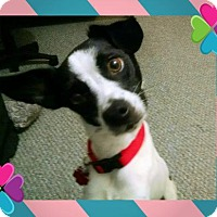 Adopt A Pet :: Catalina - Genoa City, WI